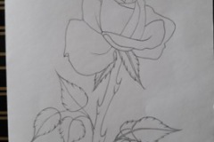 Sketch-a-rose-for-Rachel-2019
