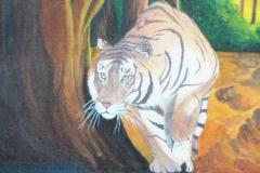 Creeping tiger